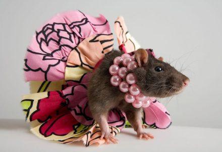 Драгоценные мышки. Интересные идеи украшений